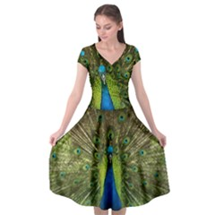 Peacock Feathers Bird Nature Cap Sleeve Wrap Front Dress